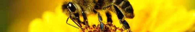 Les GS/CP à la découverte du travail de l'apiculteur